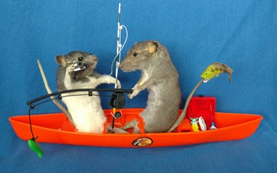Fisher-rat couple