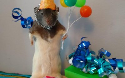 Birthday party rat