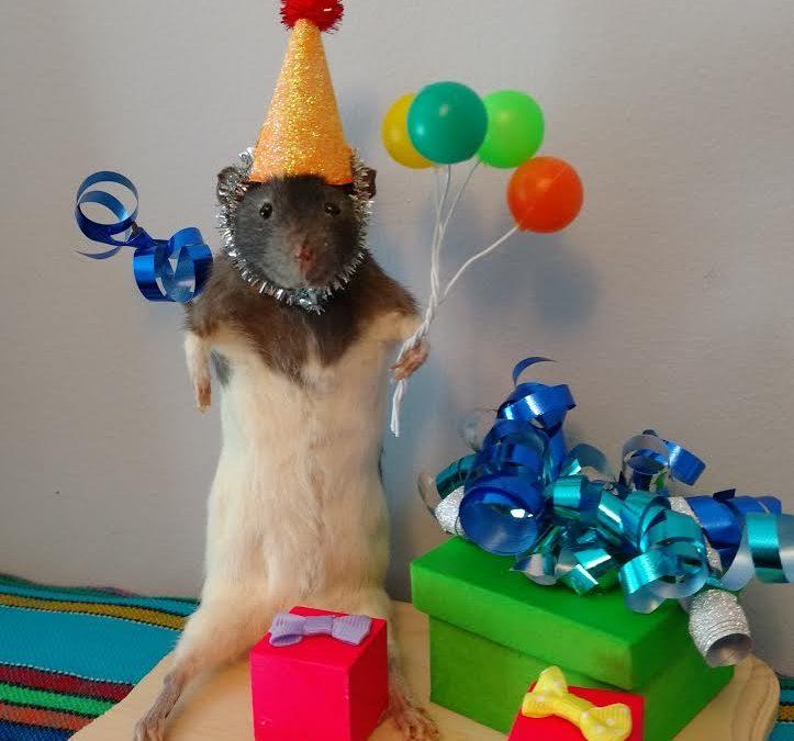 Birthday party rat