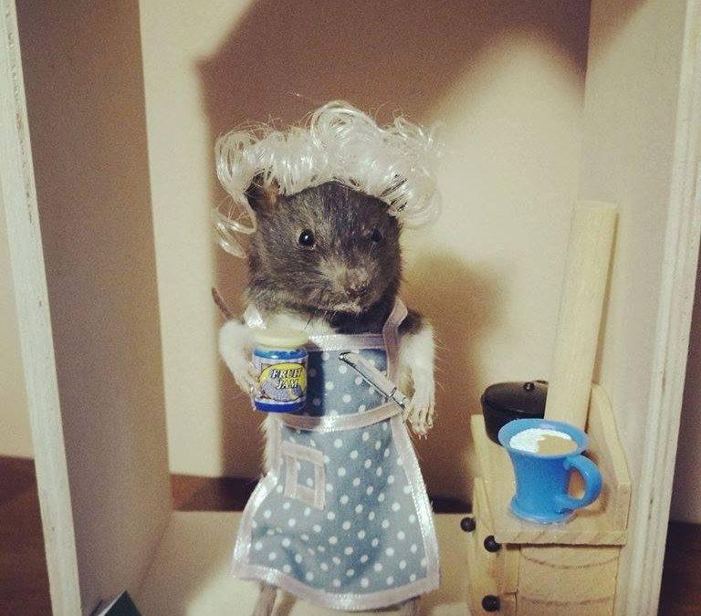 Granny rat