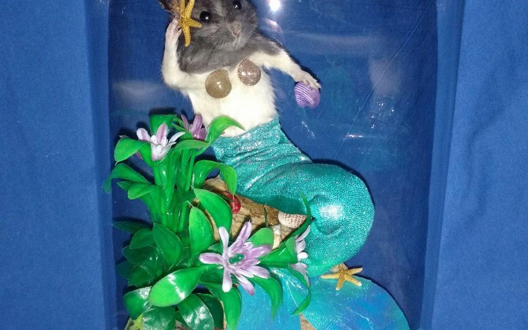 Mer-rat