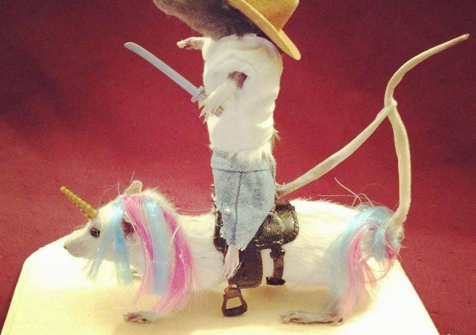 Cowboy riding a unicorn!