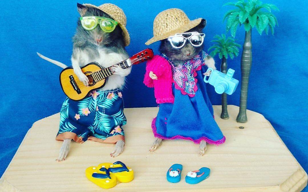 Backpacker Beach Rats
