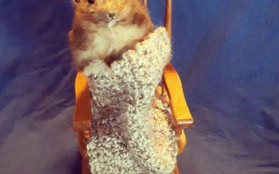 A cozy hamster