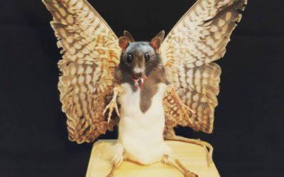 Rat-bird hybrid