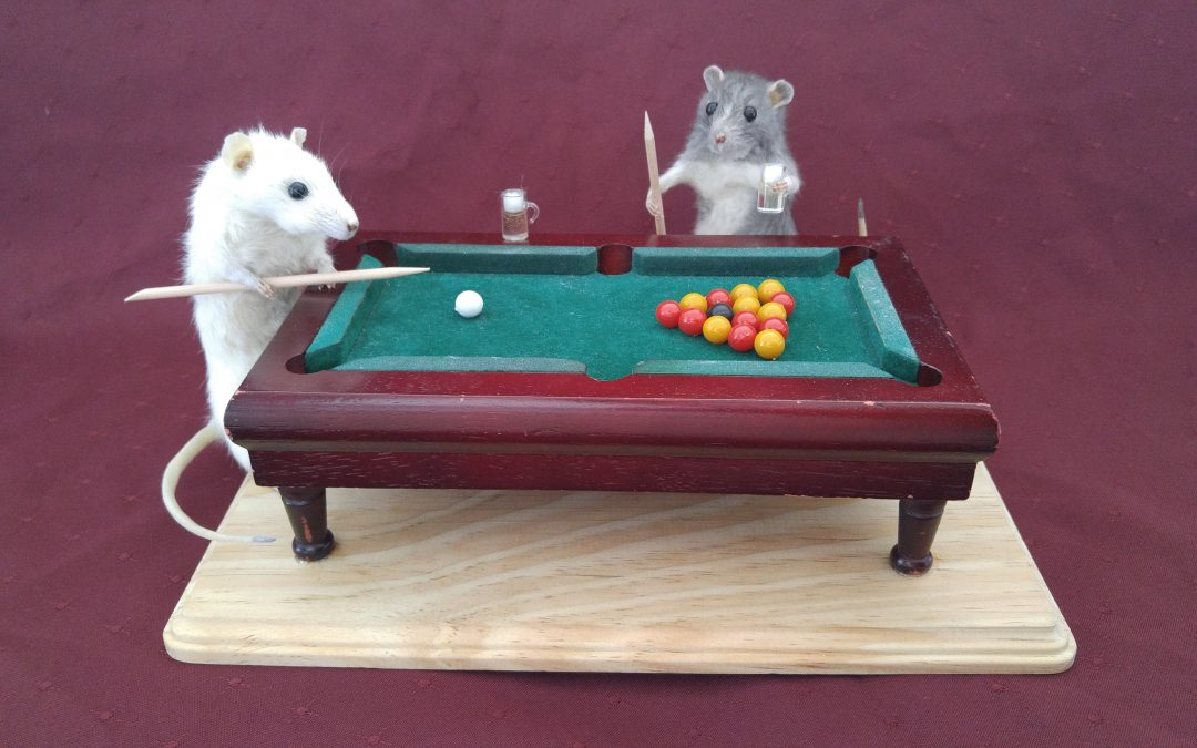 Pool Rats