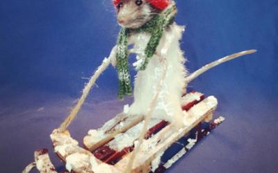 Sledding Rat